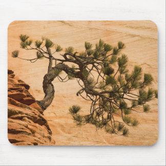 USA, Utah, Zion National Park. Pine tree Mouse Pad