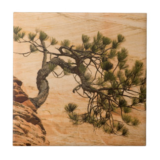 USA, Utah, Zion National Park. Pine tree Tile