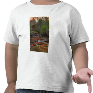 USA, Utah, Zion National Park.  Scenic from the Shirts