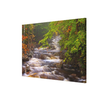 USA, Vermont, East Arlington, Flowing streams Canvas Print