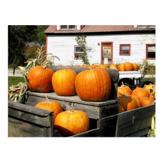 USA, Vermont. Pumpkins Postcard