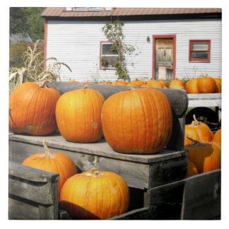 USA, Vermont. Pumpkins Tile