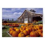 USA, Vermont, Shelbourne, Pumpkins Greeting Card