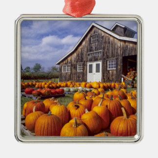 USA, Vermont, Shelbourne, Pumpkins Metal Ornament