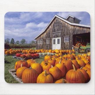 USA, Vermont, Shelbourne, Pumpkins Mouse Pad