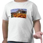 USA, Vermont, Shelbourne, Pumpkins Tee Shirts