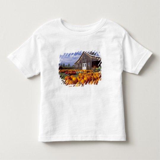 USA, Vermont, Shelbourne, Pumpkins Toddler T-shirt
