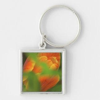 USA, Virginia, Arlington, closeup of orange Keychain