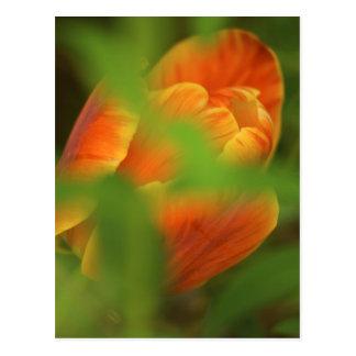 USA, Virginia, Arlington, closeup of orange Postcard