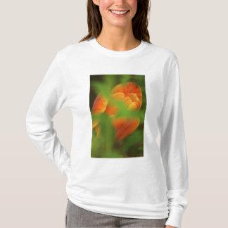 USA, Virginia, Arlington, closeup of orange T-Shirt