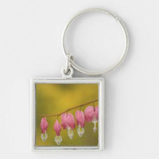 USA, Virginia, Arlington, closeup of pink Keychain