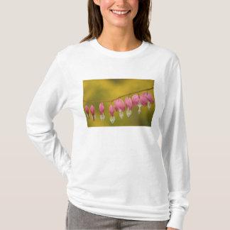 USA, Virginia, Arlington, closeup of pink T-Shirt