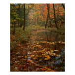 USA, Virginia, Autumn In Douthat State Park Poster