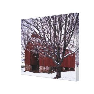 USA, Virginia, Fairfax County, Barn and Maple Canvas Print