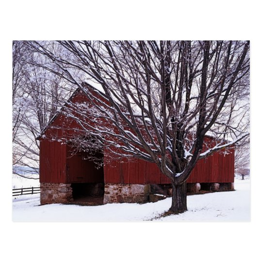 USA, Virginia, Fairfax County, Barn and Maple Postcard