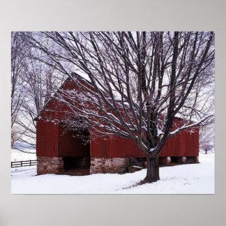 USA, Virginia, Fairfax County, Barn and Maple Poster