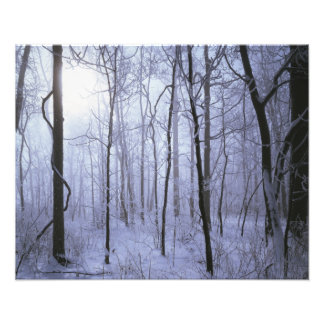 USA, Virginia, Richard Thompson Wildlife Area. Photo Print