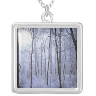 USA, Virginia, Richard Thompson Wildlife Area. Silver Plated Necklace