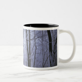 USA, Virginia, Richard Thompson Wildlife Area. Two-Tone Coffee Mug