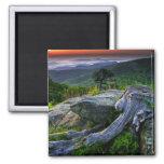 USA, Virginia, Shenandoah National Park. 2 Inch Square Magnet