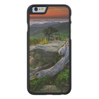 USA, Virginia, Shenandoah National Park. Carved Maple iPhone 6 Case