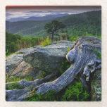 USA, Virginia, Shenandoah National Park Glass Coaster