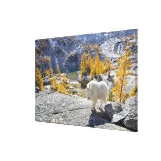 USA, WA, Alpine Lakes WIlderness Enchantments. Stretched Canvas Print