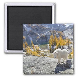USA WA Alpine Lakes WIlderness Enchantments Fridge Magnet