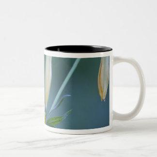 USA, WA, Mt. Rainier National Park. Columbia Two-Tone Coffee Mug