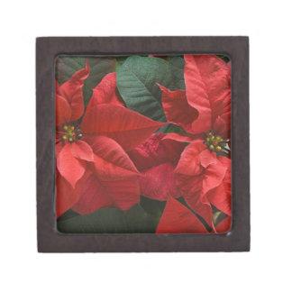 USA, WA, Red Poinsettia Detail (Euphorbia Jewelry Box
