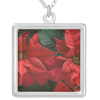 USA, WA, Red Poinsettia Detail (Euphorbia Silver Plated Necklace