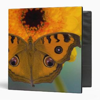 USA, WA, Sammamish, Tropical Butterfy 2 3 Ring Binder
