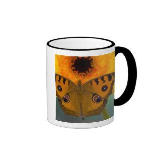 USA WA Sammamish Tropical Butterfy 2 Mugs