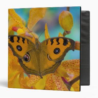 USA, WA, Sammamish, Tropical Butterfy 3 Binder