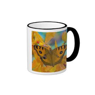 USA WA Sammamish Tropical Butterfy 3 Mugs