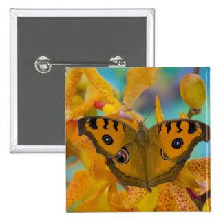 USA, WA, Sammamish, Tropical Butterfy 3 Pinback Button