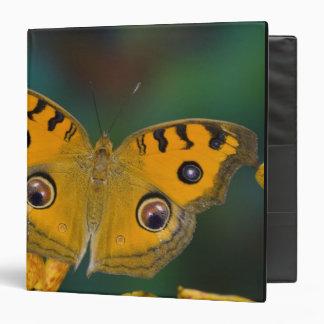 USA, WA, Sammamish, Tropical Butterfy 3 Ring Binder