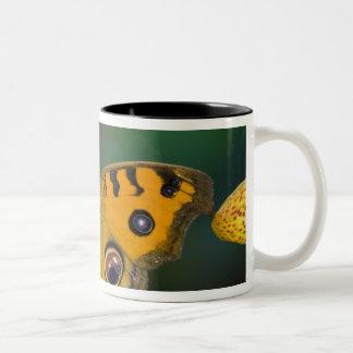 USA WA Sammamish Tropical Butterfy Coffee Mug