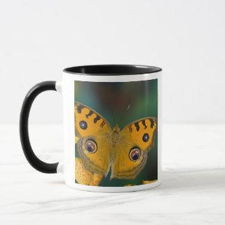 USA, WA, Sammamish, Tropical Butterfy Mug
