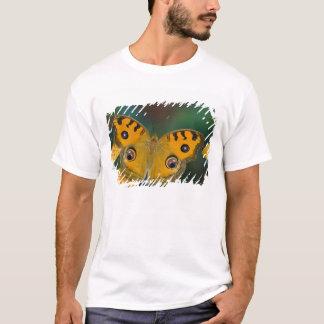 USA, WA, Sammamish, Tropical Butterfy T-Shirt