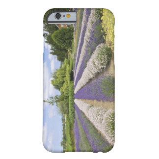 USA, WA, Sequim, Purple Haze Lavender Farm Barely There iPhone 6 Case