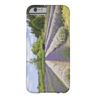 USA, WA, Sequim, Purple Haze Lavender Farm Barely There iPhone 6 Case