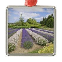 USA, WA, Sequim, Purple Haze Lavender Farm Metal Ornament