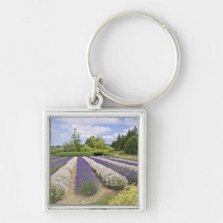 USA, WA, Sequim, Purple Haze Lavender Farm Silver-Colored Square Keychain