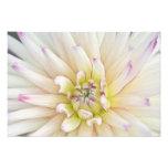 USA, Washington, Bellevue, Bellevue Botanical 2 Photo Print