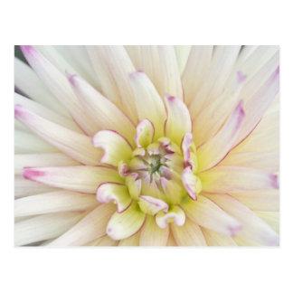 USA, Washington, Bellevue, Bellevue Botanical 2 Postcard
