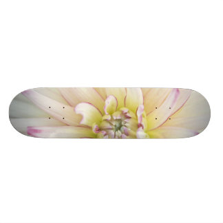 USA, Washington, Bellevue, Bellevue Botanical 2 Custom Skateboard