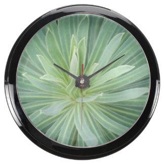USA, Washington, Bellevue, Bellevue Botanical 4 Fish Tank Clocks
