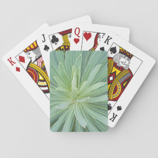 USA, Washington, Bellevue, Bellevue Botanical 4 Playing Cards