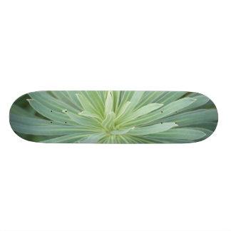 USA, Washington, Bellevue, Bellevue Botanical 4 Skateboard Deck